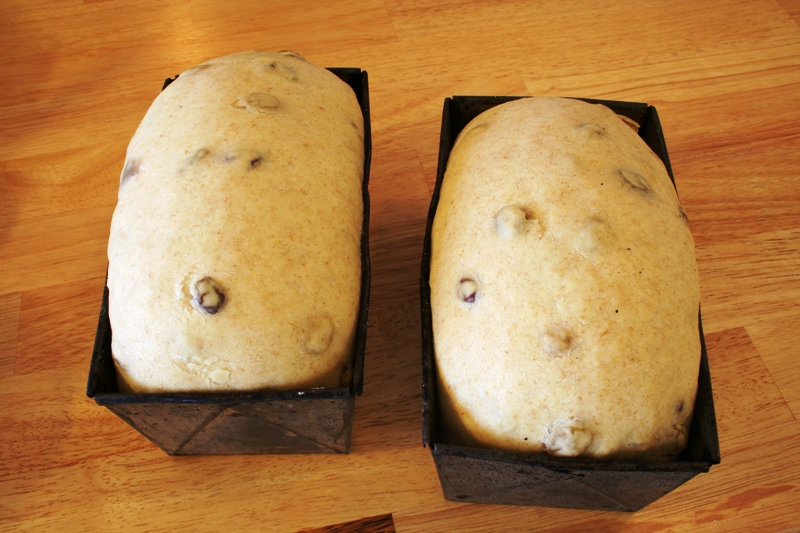 Proofed Raisin Bread