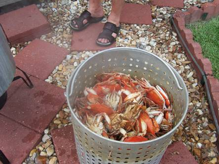 Hot boiled crabs ready to eat